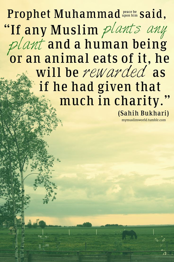 "Prophet Muhammad (sallalaahu alaihi wa sallam) said, ""If any Muslim plants any plant and a human being or an animal eats of it, he will be rewarded as if he had given that much in charity."""