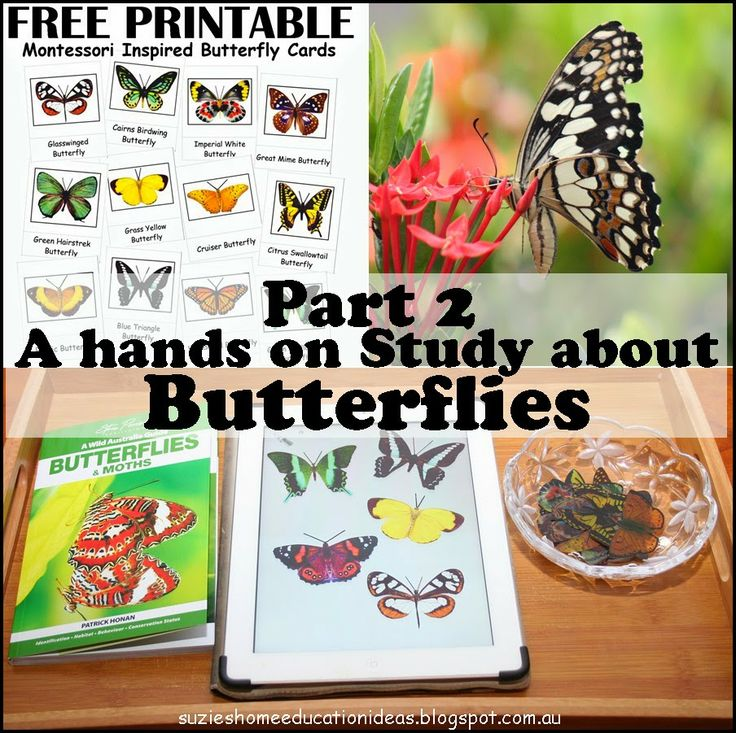 A hands-on Study about Butterflies that includes free butterfly printables from Suzie's Home Education Ideas