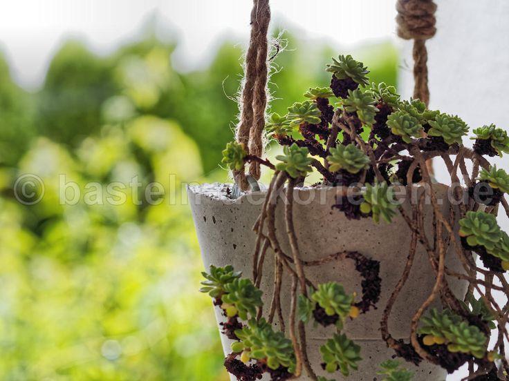 ein chor von winterhelden dekoration christrosen pflanzung. Black Bedroom Furniture Sets. Home Design Ideas
