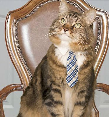A Estrambólica Arte = ciência + tecnologia + arte: Foto estrambólica do dia: Gato de gravata
