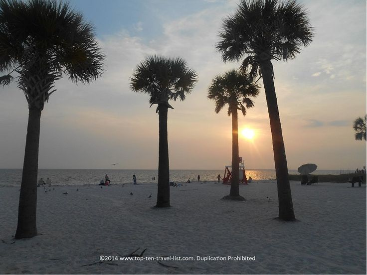Beautiful sunset and palm trees at Fred Howard Park - Tarpon Springs, Florida