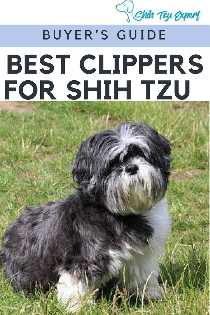 12 Best Dog Clippers For Shih Tzu 2019 Fun Easy Grooming
