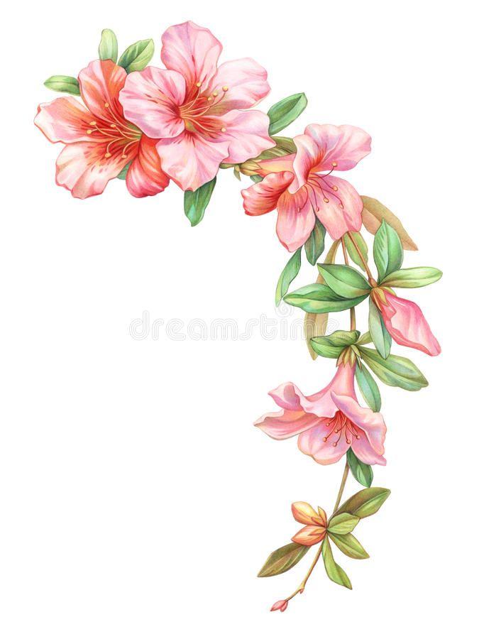 Coloriage Guirlande Fleurs.Photo A Propos Guirlande Rose De Guirlande De Fleurs D