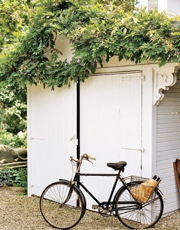 Wisteria Shed and bicycle
