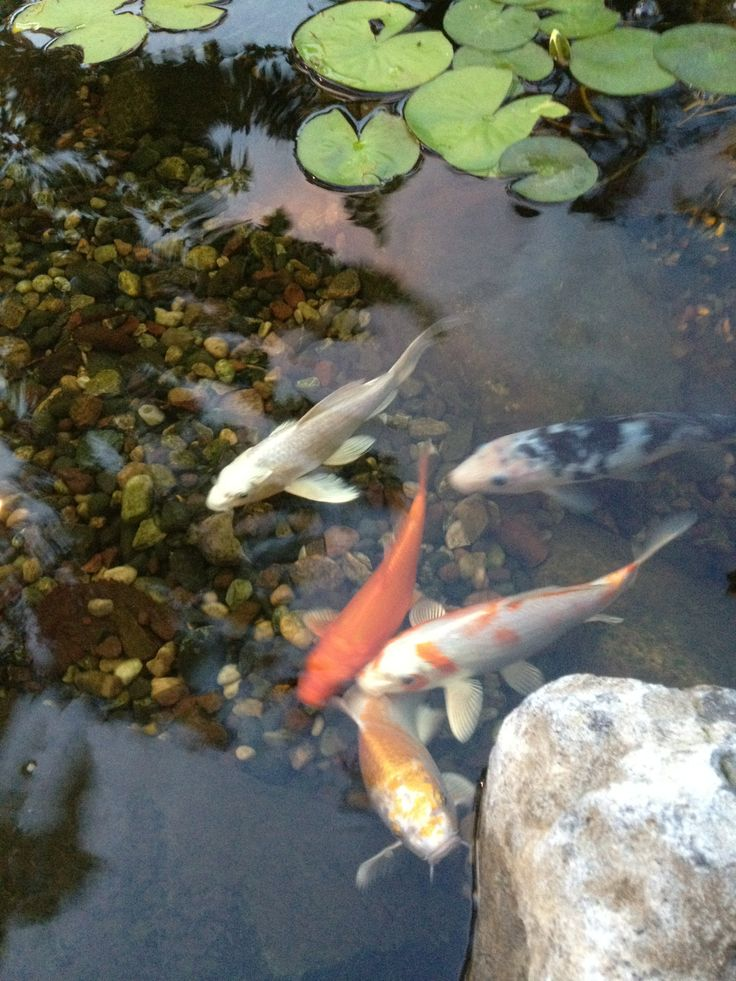 17 best ponds for kids images on pinterest water for Koi pond builders mn