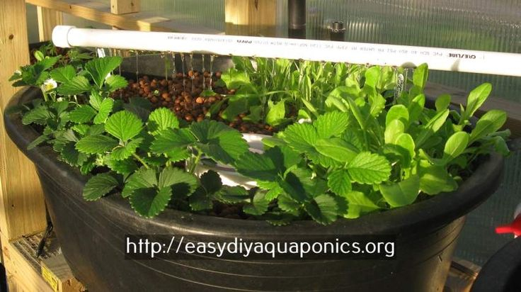 aquaculture systems for sale - aquaponics setup for sale.commercial aquaponics australia 2497015131