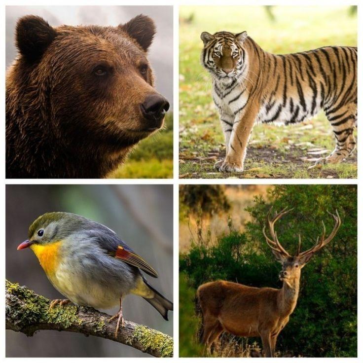 ❝ Horóscopo animal: ¿Qué criatura de poder te acompañará este año para ayudarte a crecer? ❞ ↪ Vía: proZesa