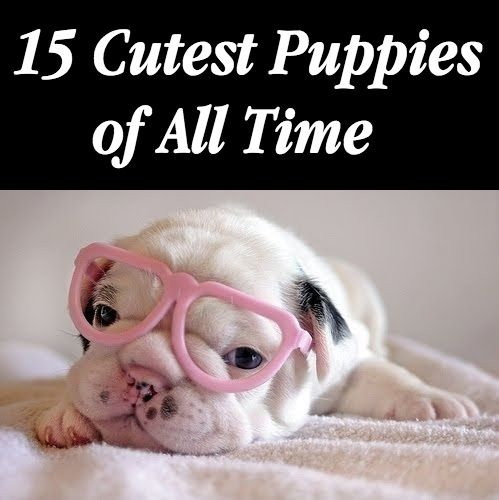 Could there possibly be anything cuter than these 15 adorable puppies?