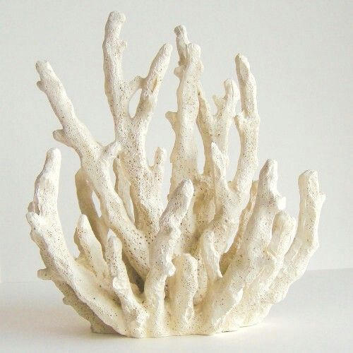 Beautiful White Coral Statue From Ebay My Apartment
