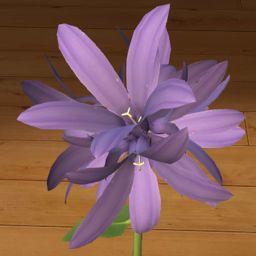 Dzwonek skupiony fioletowy 3D  www.florysta3d.pl