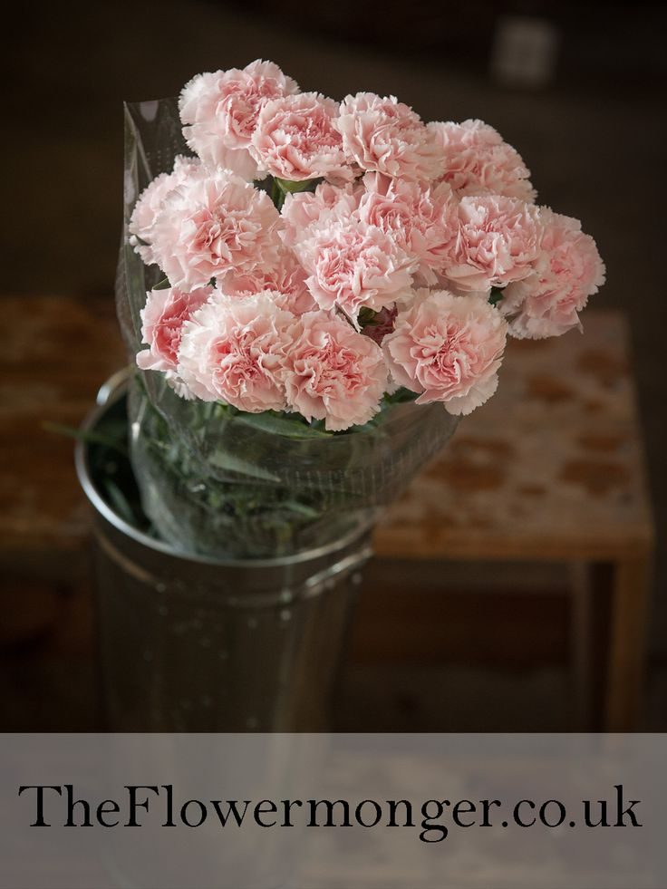 Carnations in Pale Pink. Available in bunches of 10 stems from The Flowermonger, the wholesale floral home delivery service.
