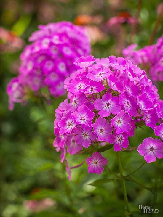 17 Best Images About Perennials From The Barn Nursery