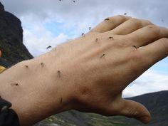 Простые способы избавиться от комаров