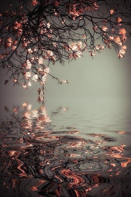 ♥ OUR Sense of Beauty ♥ by mariateresa.dondi