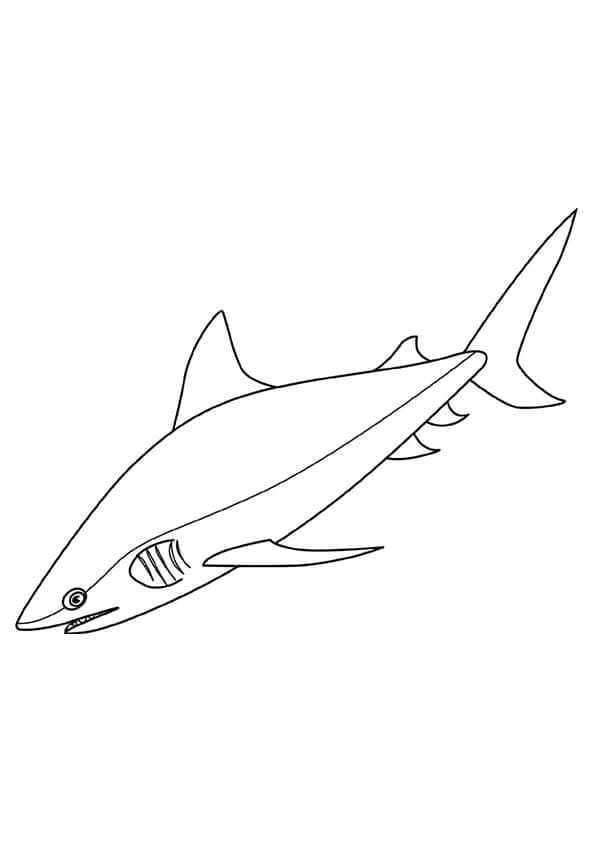 Bull Shark Coloring Page A4 Shark Coloring Pages Bull Shark Coloring Pages