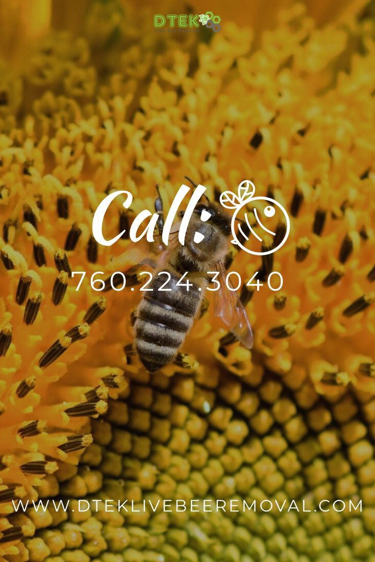 🐝Live Bee Removal San Diego 🌴 ☎️Call Anytime 760-224-3040