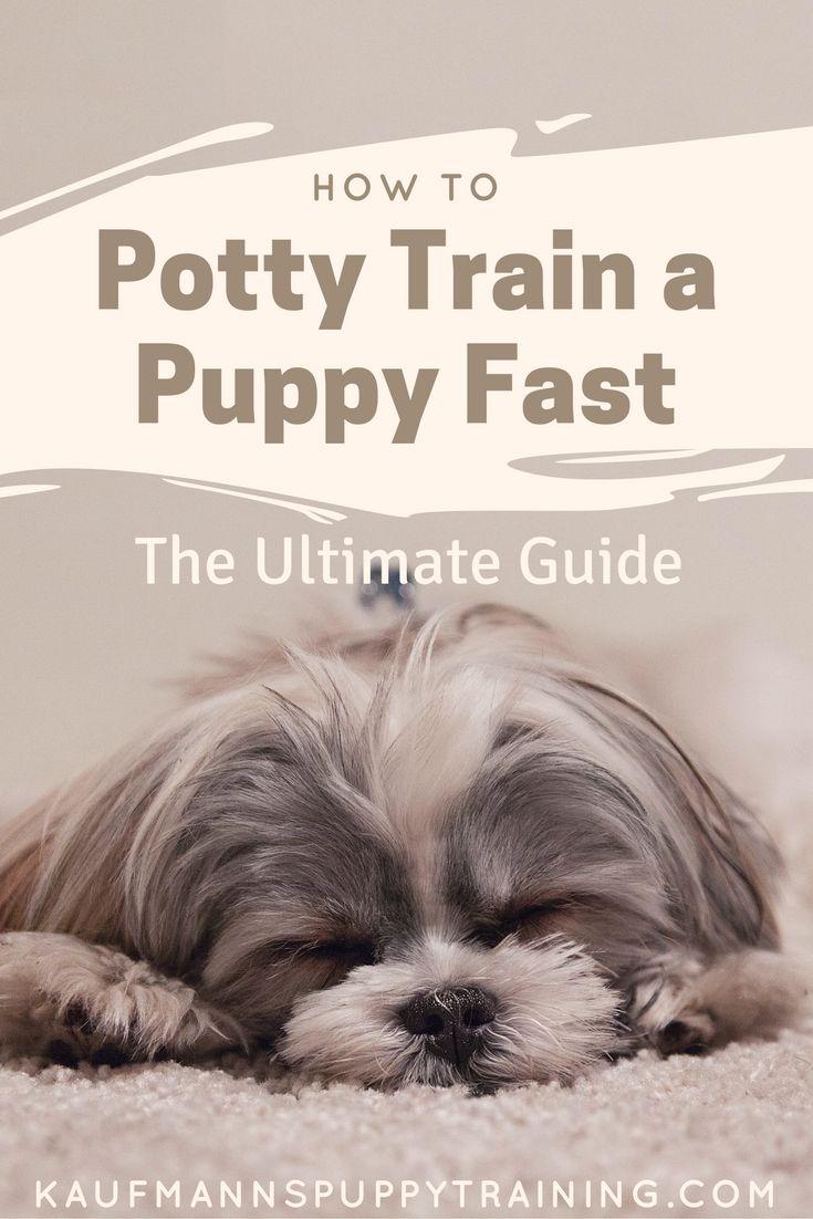 best 25+ potty training puppies ideas on pinterest | potty