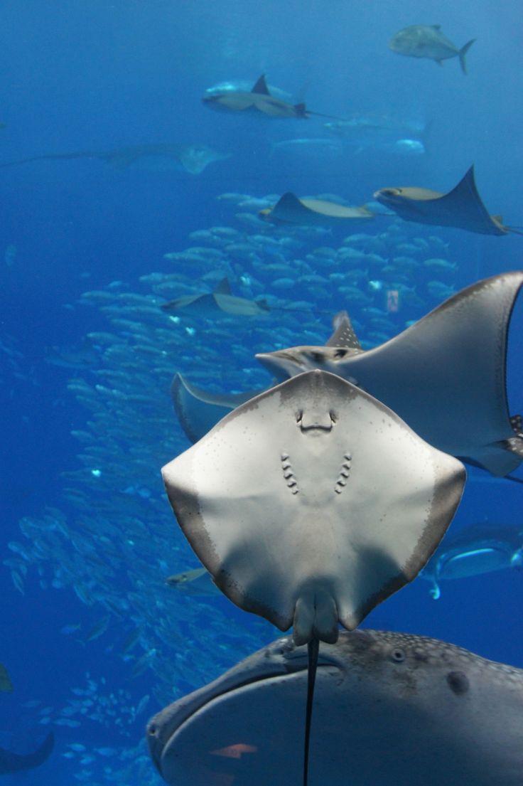 Beautiful Aquarium!