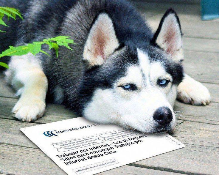 surveyeah colombia trabajosmanualesdesdecasa Dogs