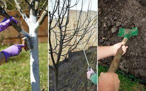 Осенняя обработка сада от болезней и вредителей