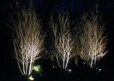 Landscape Lighting   Stecks Nursery And Landscaping | Renos | Pinterest |  Landscaping, Lights And Outdoor Lighting