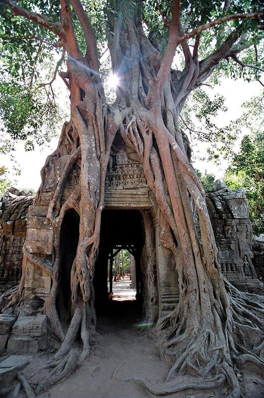 Ta Prohm, Cambodia   Papo Viagem