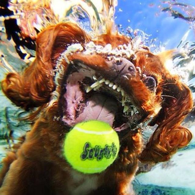 Hunder unter Wasser