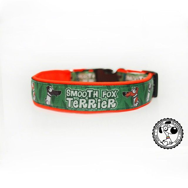 Obojek s grafikou od Blackberry | Collar with graphic by Blackberry #smoothfoxterrier #smoothfox #hladkosrstyfoxterrier #hladkosrstyfoxterier #foxterier #foxterrier #newcollar #novyobojek #orangecolor #greencolor #oranzova #zelena #goodsfordogs #vecipropsy #nicecollar #krasnyobojek #dog #pes #goodjob #dobraprace #byblackberry #odblackberry #design