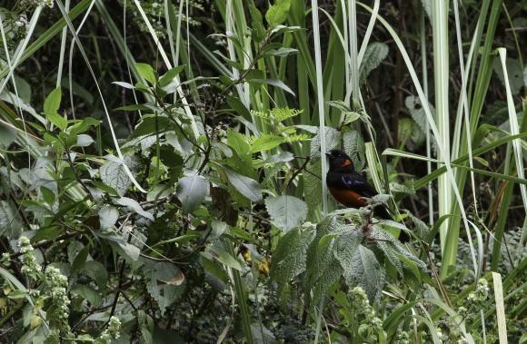 National Geographic coloca al Bosque Nublado de Quito entre los mejores lugares del mundo para visitar | ANDES