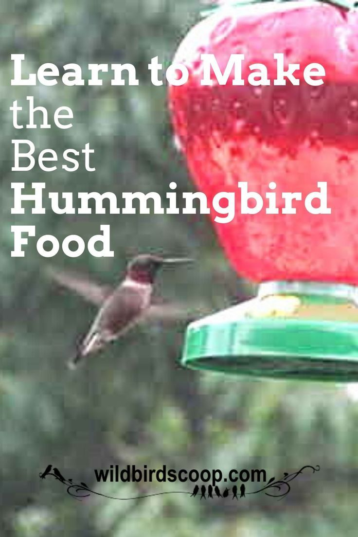 Give Hummingbirds The Best Nectar Recipe To Fill Their Feeders