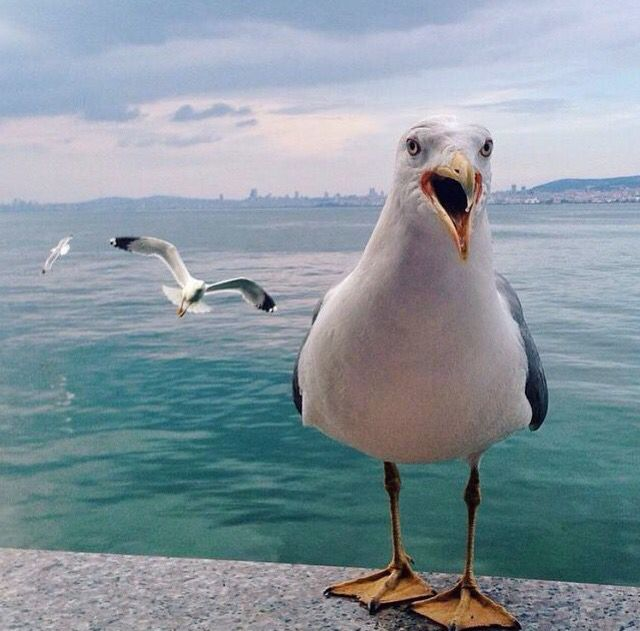 "Reminds me of the seagull in the movie ""Finding Nemo"" !!!"