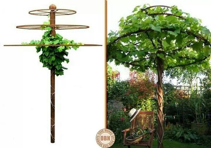 Turn a grape or other vine into a tree with this trellis Garden diy