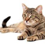 Kako dresirati i vaspitati mačku