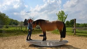 hundkatzemaus: Agility-Training für Pferde