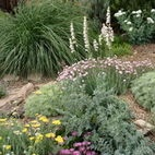 Rock Garden in Albuquerque - Waterwise Landscapes Incorporated
