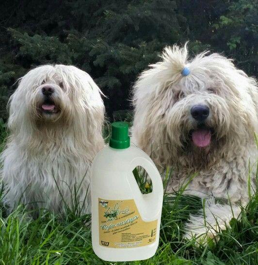 #Zöldérzés #vegán #mosószer organikus növényi szappannal. Nem tartalmaz tartósítószert, színezéket és illatanyagot. Színes és fehér textíliához, minden hőfokon. Mosható pelenkákhoz is. https://www.facebook.com/ZoldErzesOkotisztitoszerek/