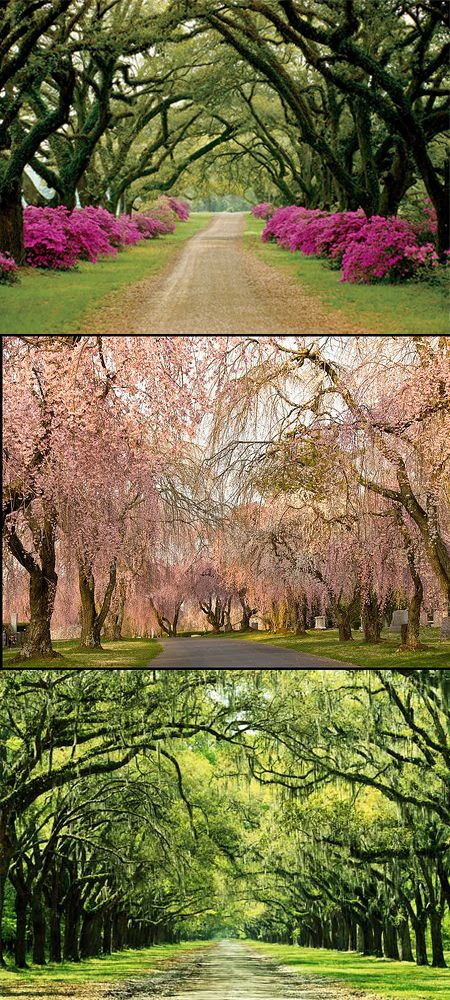 Tree lined driveways are just so beautiful. I want one.