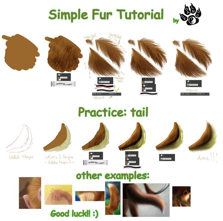 Photoshop Tutorial   Simple fur tutorial by ~Gold-Fang on deviantART