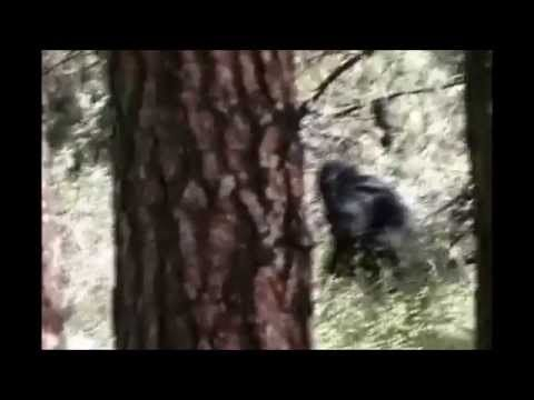 The Hoffman Bigfoot Video: The PG Film Rival - YouTube
