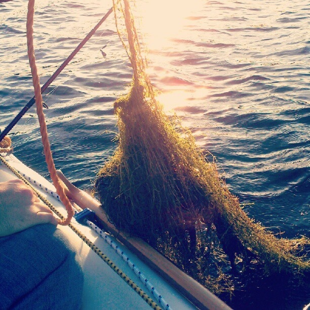 Bunch of weeds caught on the boat anchor at Eagle Lake.