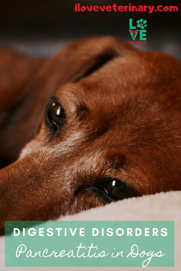Digestive disorders pancreatitis in dogs pancreatitis