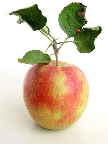 An apple a day...: Daily Serving, Autumn, Fruits Monde, Serving Canada, Honey Crisp, Fruits And Vegetables, The Dance, Canada Food, Crisp Apples