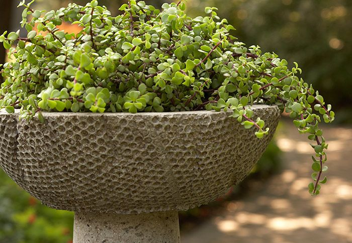 hypertufa with pedestal base This bowl-shape hypertufa pot has a built-in pedestal that gives it the look of a valued piece of garden art. Textured with bubble wrap and filled with sprawling stems of jade, the container makes a simple yet strong statement.