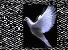 Gołąbek biały