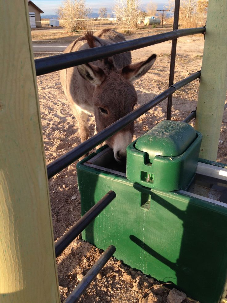 Frozen Automatic Horse Waterer. Your automatic waterer for your horses needs to be installed properly for your location and used regularly to keep from freezing.