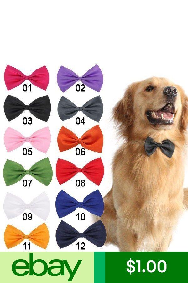 Collars Pet Supplies Pinterest Kitten Toys Pet Puppy And Dog Cat