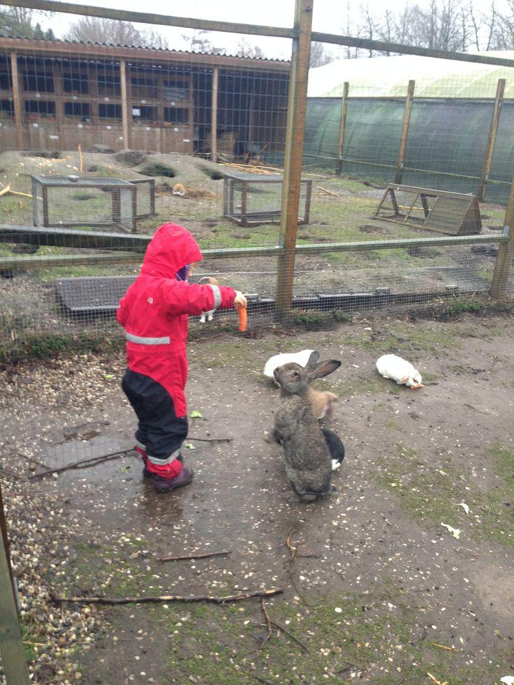 På Toftegården i Albertslund, kan man hilse på kaniner, heste, geder, får, køer og tamme katte.