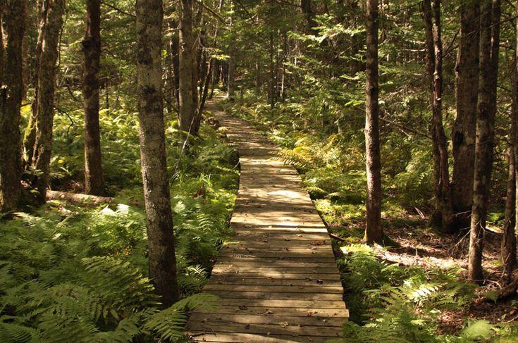 Ellenwood Provincial Park — 2km marked woodland trail in Deerfield, Nova Scotia