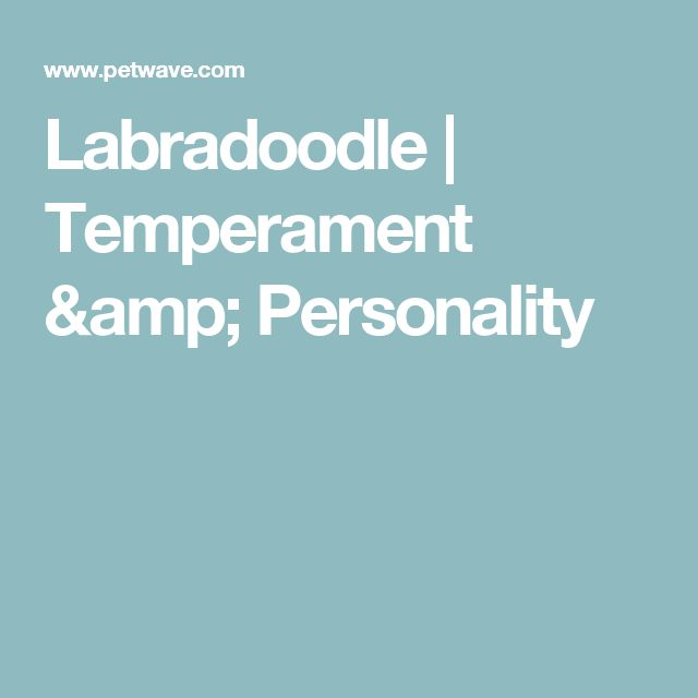 Labradoodle | Temperament & Personality