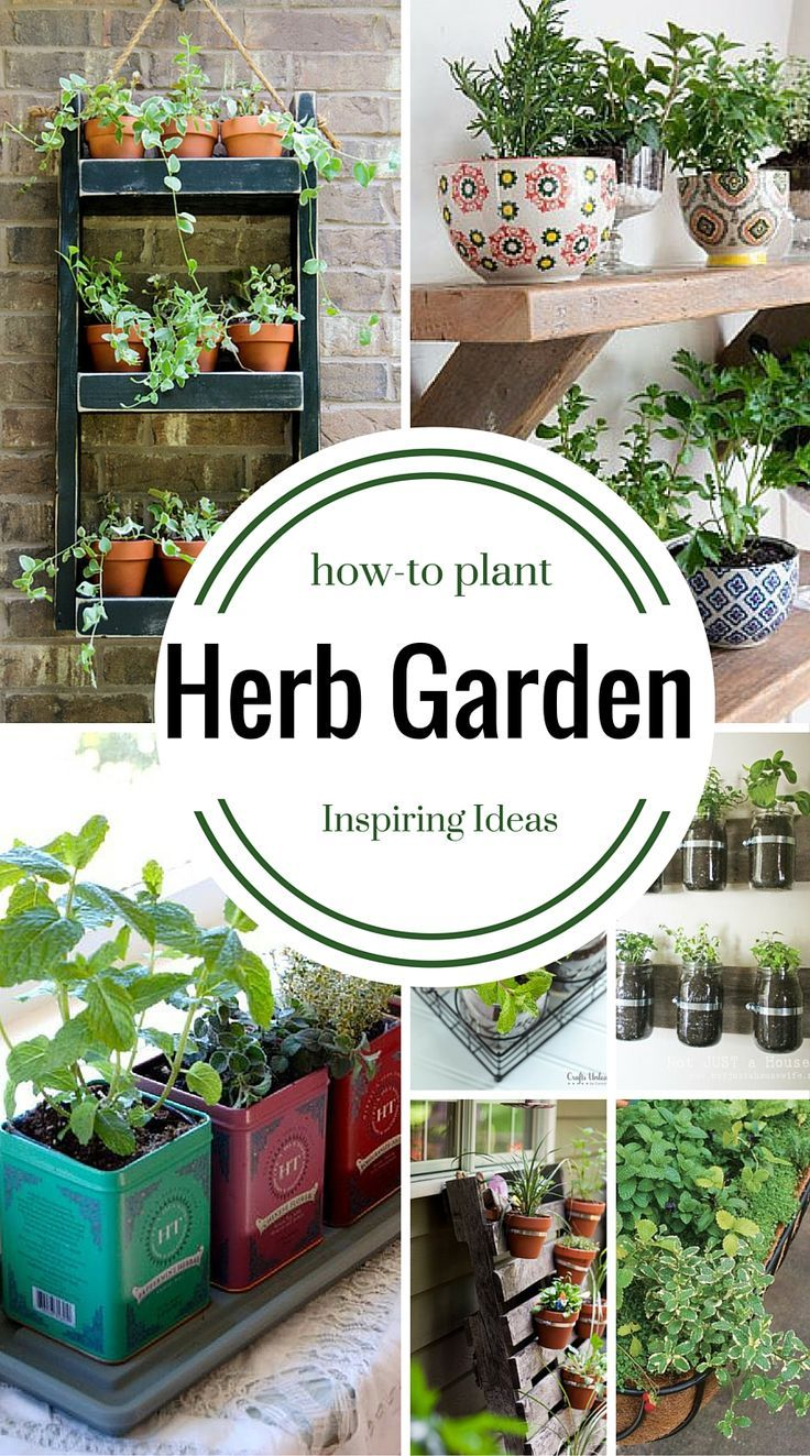 How to plant an herb garden in a small container, a window box, a full garden, a coffee cup or in a metal bucket.